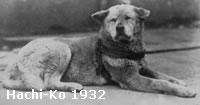 Continuação História de Hachiko
