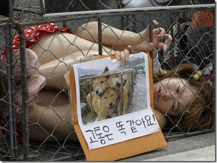 south-korea-dog-mat_fran