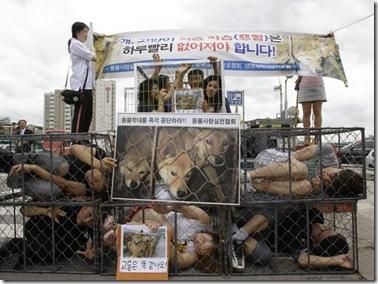 south-korea-dog-meat_fran
