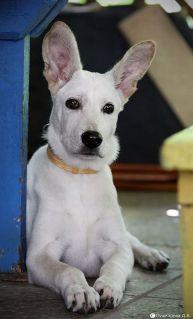 dogs_10.jpg