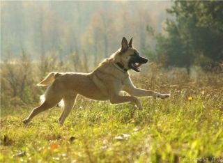 dogs_58.jpg