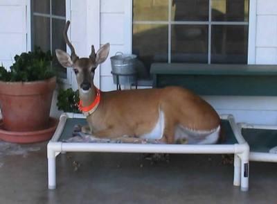 Snyder+the+Dog+Deer.jpg