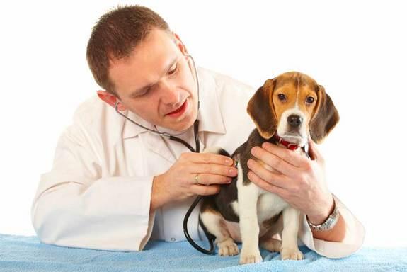 Resultado de imagem para doenças humanas em pets